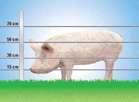 Pig Electric Fencing Electric Pig Fence